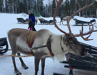 Visit a Reindeer Farm & short sleigh ride