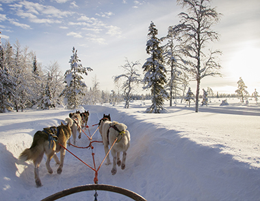 Arctic Husky Safari in Pure Nature