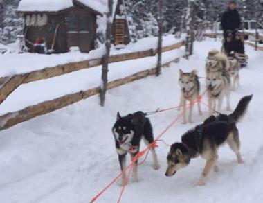 Husky team! Let's go!!!