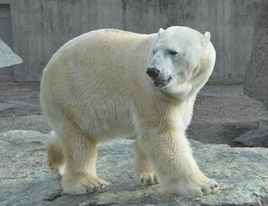 Day Tour of Arctic Wildlife Zoo-Ranua
