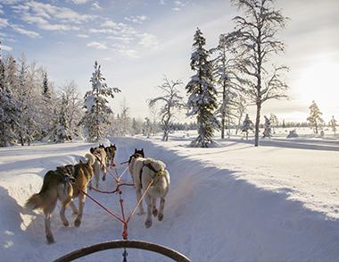Arctic Husky Safari in Pure Nature